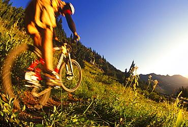 A mountain bike rider blasts down a trail just outside Mt. Rainier National Park at sunrise.