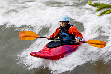A young, Asian-looking woman surfing a wave in a whitewater kayak, Elk river, East Kootenies, British Columbia, Canada.