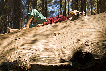 A young yoman naps on a giant  downed tree.
