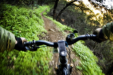 A mountain biker speeds down a path surrounded by a lush, green, environment.
