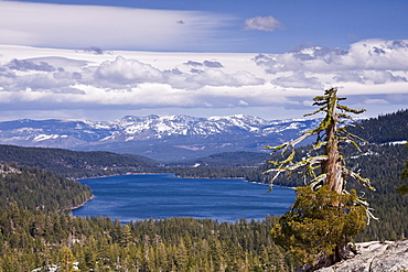Donner Lake and the Sierra Mountains and a dead pine tree on a partly cloudy day in California