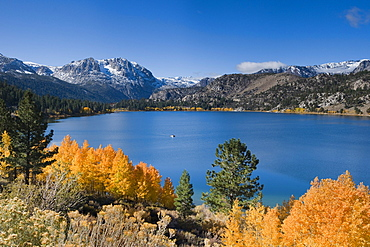 Yellow fall aspen trees with snowy mountians and June Lake in the Sierra mountains of California