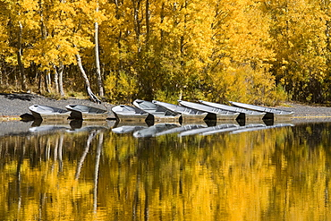A row of fishing boats and autumn aspens trees reflecting in Silver Lake in the Sierra mountains of California