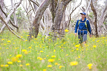 Sabina Allemann, 49 years old, is hiking to Mt Tabletop in the Alpine National Park on 21st January 2012, Victoria, Australia.