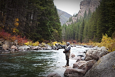 A athletic man fly fishing stands on the banks of the Gallatin River surrounded with the fall colors in Bozeman, Montana.
