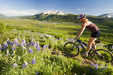 A woman mountain biking past wildflowers on the Lupine Loop Trail in  Crested Butte, Colorado.