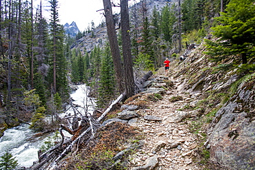 A woman trail runs up Big Creek in the Selway-Bitterroot Wilderness, Montana, Big Creek, Montana, USA