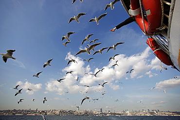 seagulls flying behind the ferry, Istanbul, Turkey