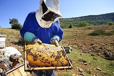 Beekeeper. Alto Tajo Natural Park. Guadalajara. Spain