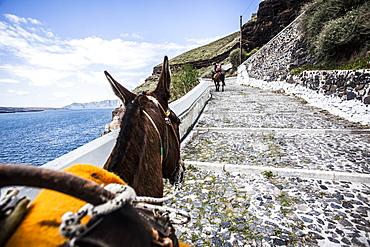 Donkey walking up steps on a hillside in Santorini, Greece.