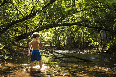 Toddler boy explores creek under canopy of trees in Bidwell Park, Chico, California.