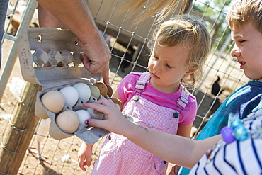 Toddler boy and girl observe different colored eggs from local farm's chickens in Chico, California.