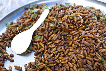 bamboo worms is a local gourmet food in Thailand