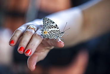 A butterfly rests on a woman?s hand on a boat traveling down the Tambopata River in Peru's Amazon Jungle.