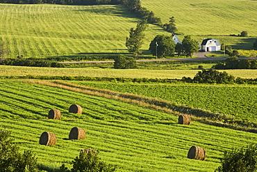 Farm fields near French River, Prince Edward Island, Canada