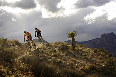 Anne Sylvester and Jeremy Thatcher mountain biking on the Cottonwood Trails in the Red Rock National Conservation Area, United States of America