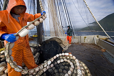 "08/15/08 Crew members Alexai Gamble and Nick Demmert haul in the net while sein fishing on Captain Larry Demmert's boat just off of the outer islands west of Prince of Whales Island in SE Alaska. This is a native fishing hole. At this time they were catching mostly ""humpies"", United States of America"