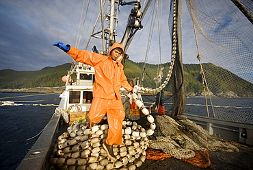 "08/15/08 Crew member Alexai Gamble hauls in the net while sein fishing on Captain Larry Demmert's boat just off of the outer islands west of Prince of Whales Island in SE Alaska. This is a native fishing hole. At this time they were catching mostly ""humpies"", United States of America"