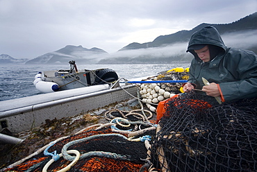 "08/15/08 Crew member Nick Demmert repairs the net while sein fishing on Captain Larry Demmert's boat just off of the outer islands west of Prince of Whales Island in SE Alaska. This is a native fishing hole. At this time they were catching mostly ""humpies"", United States of America"