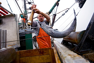 "Sept 24, 2008 20 miles offshore of Morro Bay California. Captain Bill Blue fishing for Sable Fish or ""Black Cod"" off the coast of Big Sur California using the ""hook and line"", or ""long-line"" method. A new wave in sustainable commercial fishing is pushing fisherman to switch from higher impact methods of harvesting fish like trawling- to hook and line or long line harvest, United States of America"