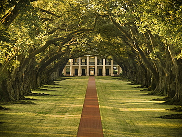 Oak lined pathway on a plantation