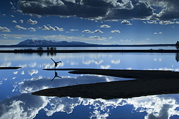One hand cart wheel reflected in Yellowstone Lake in Yellowstone National park Wyoming.
