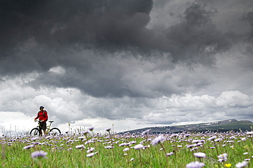 A man sitting on his mountain bike in a field of purple flowers and stormy grey clouds enjoying the view.