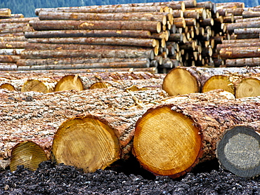Piles of freshly cut logs in British Colombia, Canada.
