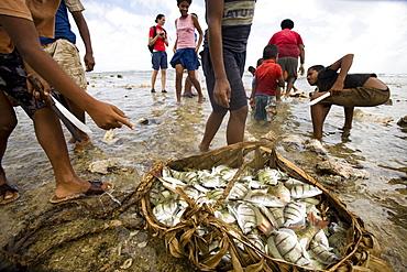 A basket holds the harvest of a large fish harvest during low tide.