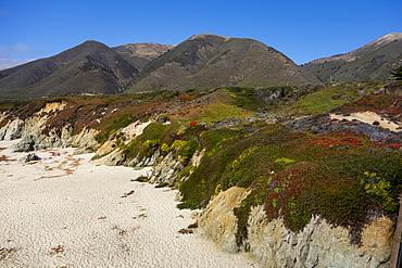 Coastal plants, Big Sur