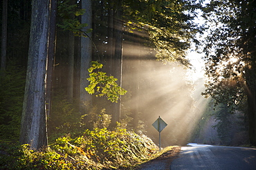 Beams of sunlight shine through the canopy on to a country road.