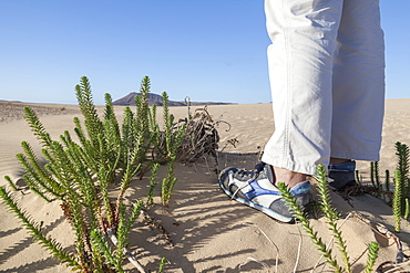 Feet with shoes near some desert green plant in  sandy desert