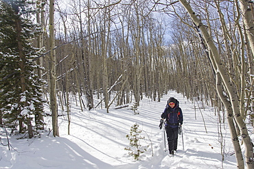 Hiking through a quiet Aspen forest in the winter, Mt. Evans Wilderness, Colorado, United States of America