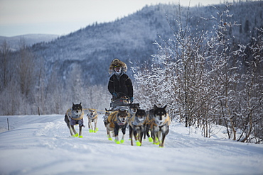 The Yukon Quest International Sled Dog Race is considerate by some to be the world?s toughest, and just finishing can be the reward. This year the start line was in Whitehorse, Yukon, where the 1,000 miles (1,600 kilometres) of trail follow the old trav
