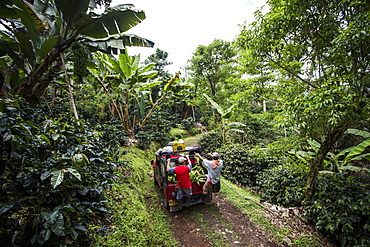 A group of people ride on a car as they haul bananas out of the thick forest in rural Colombia.