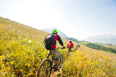 Mountain Bikers Riding Through A Field Of Wildflowers In Crested Butte