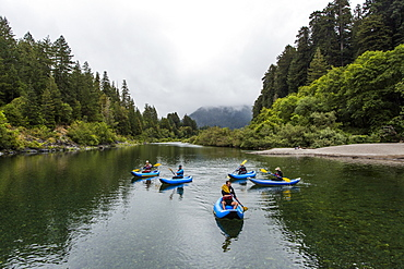A Group Of Kayakers Enjoy The Smith River In Redwoods National Park