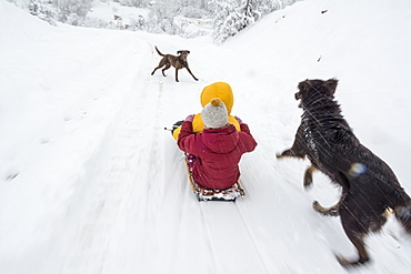 Two young girls sledding down a driveway with a dog running alongside