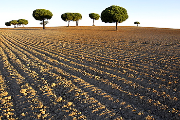 Land Of Field In The Lagunas De Villafafila