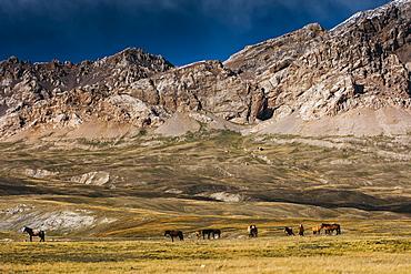 Horses Grazing In Tien Shan Mountains, Kazakhstan