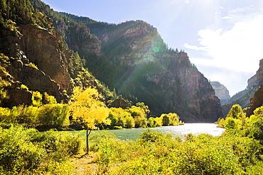 Golden Tree Next To The Colorado River