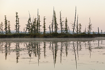 Reflection Of Coniferous Trees On The Edge Of Spencer Pond, Northern Maine