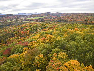 Colorful trees reach peak foliage in Vermont