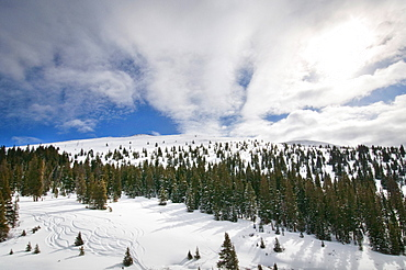 Winter Landscape With Backcountry Ski Trails, Vail, Colorado