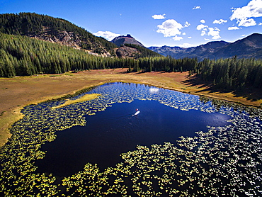 Aerial view of paddleboarder in the middle of lilly pads on an alpine lake in Colorado (Drone)