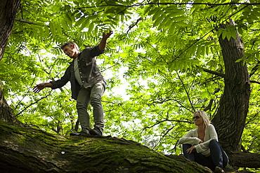 Mature man walks along tree limb, foliage