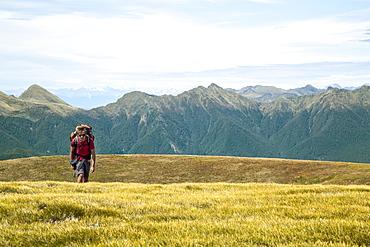 Hiking In Kahurangi National Park, New Zealand