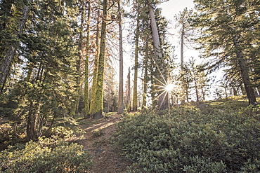 Trees Along The Trail At Inspiration Point In Yosemite National Park, California
