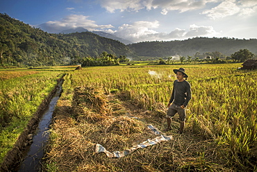 Rice Field Worker In West Sumatra, Indonesia