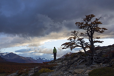 Male photographer, holding a camera in his right hand, looking contemplatively into distance in a pristine and wild landscape. He's looking towards a mountain range with storm clouds above his head. On his right, closer to the camera, there is a lenga beech tree.